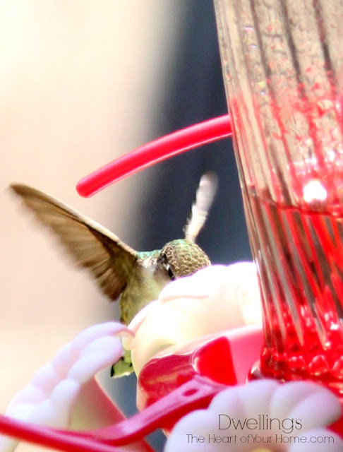 Hummingbird visiting the feeder.