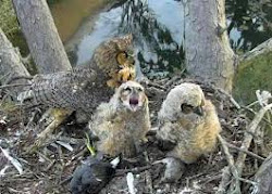 Owlets from HDontap