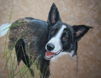 dog portrait paintings in pastel by award winning Canadian animal artist Colette Theriault