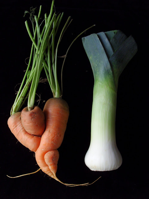 Fresh carrot and leek for chicken soup or casserole