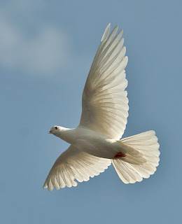 white bird in flight