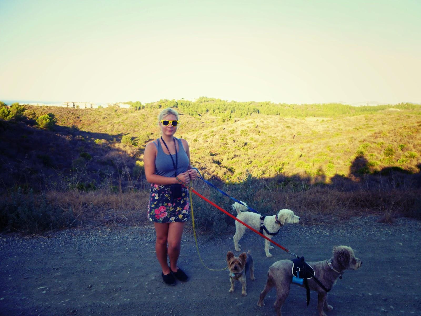 spanish waterdogs