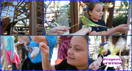 aquarium parakeets