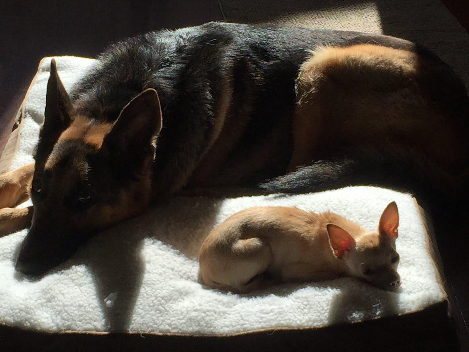 Max and Iggy