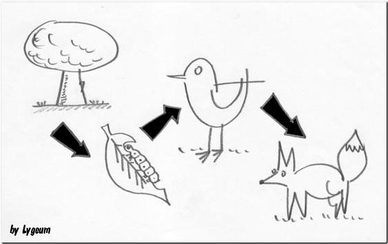 Dibujo de la cadena alimenticia para colorear - Imagui
