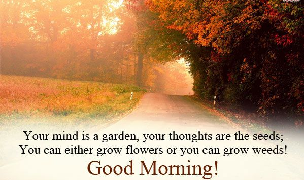 Good morning garden