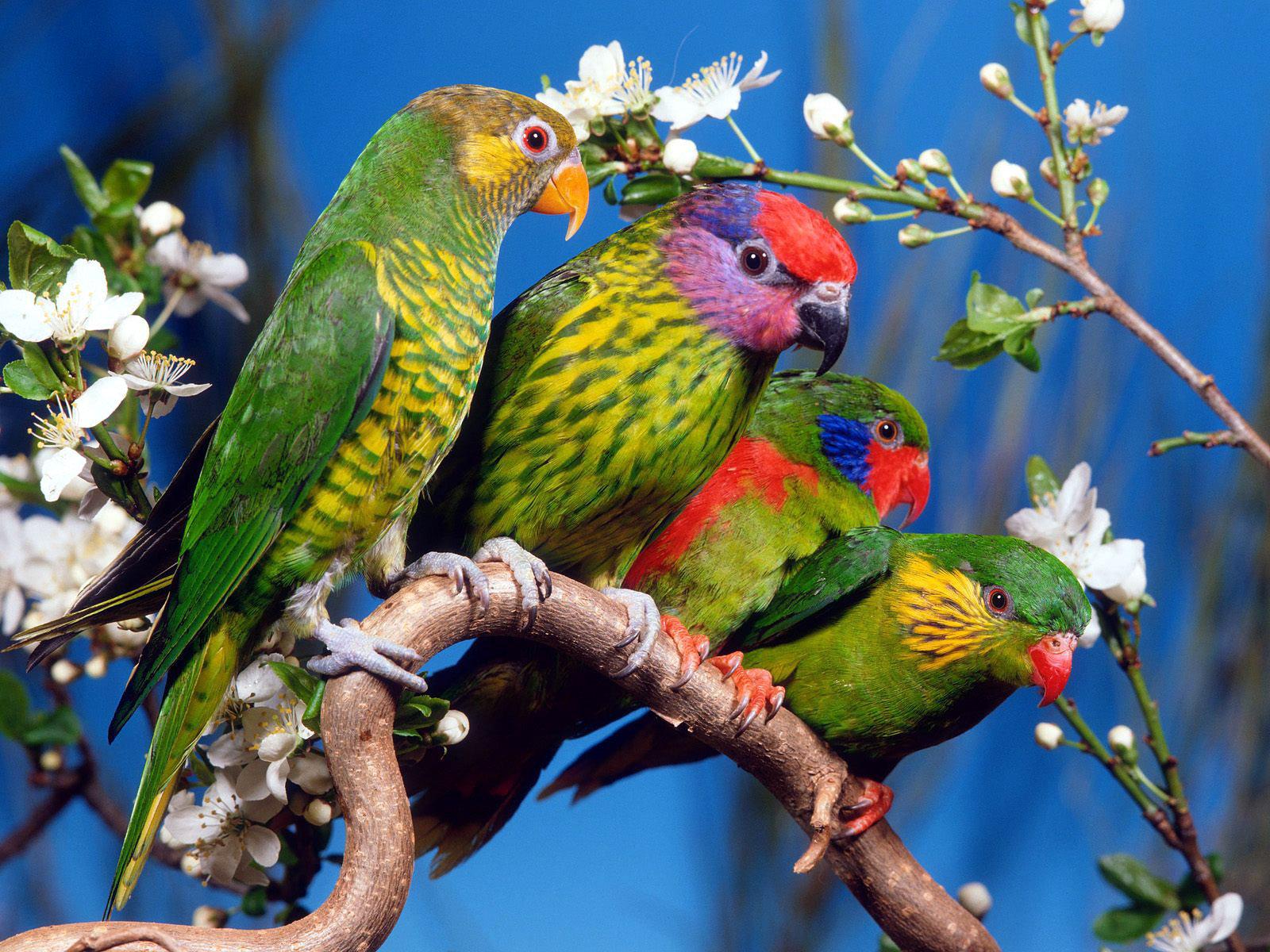 http://3.bp.blogspot.com/-IsT0712hPuQ/Tka_JHixeMI/AAAAAAAACGI/QAEUecBuv5o/s1600/four_green_birds_wallpaper.jpg