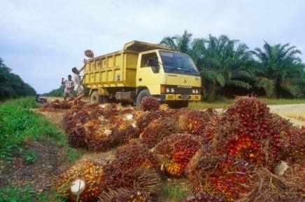 Traksi atau Vehicle Dalam Perkebunan Kelapa Sawit
