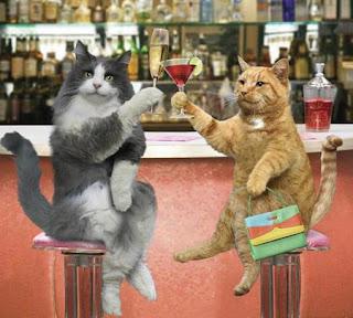 imagenes animales graciosas - Fotos Graciosas Animales El Huffington Post