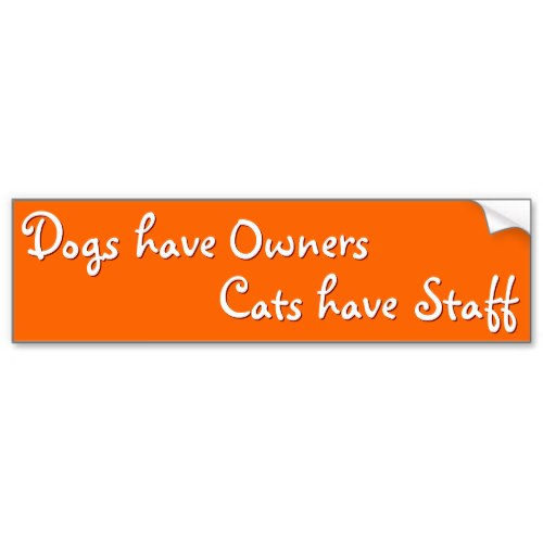 Dogs 've Owners Cats 've Staff | Funny Bumper Sticker