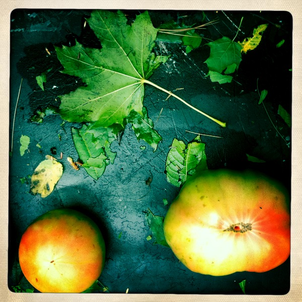 green tomatoes essay The health benefits of tomatoes can be attributed to their wealth of nutrients and vitamins, including an impressive amount of vitamin a, vitamin c,.