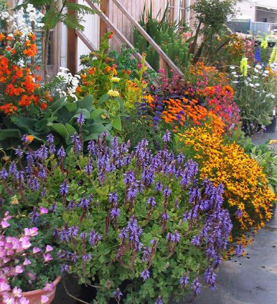 alamodeus container gardening