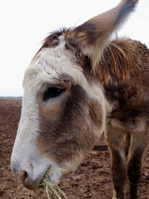 Donkey is a Star Now at the Ranch