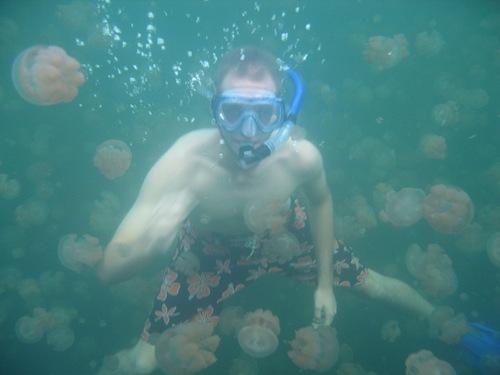 بالصور و الفيديو : بحيرة قناديل البحر فى جزيرة بالاو – اسبح مع ملاين القناديل دون أن تتعرض للإذى 8.jpg