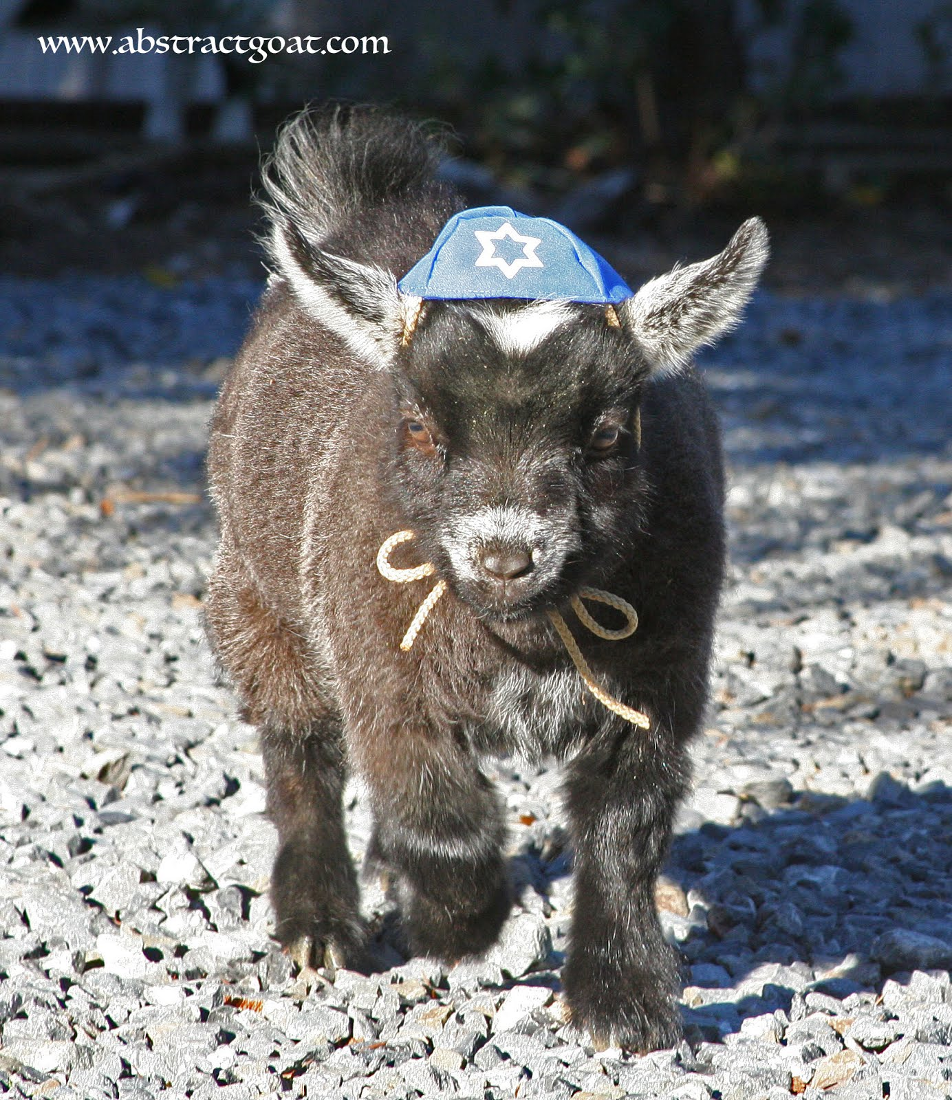 Happy Hanukkah, too!