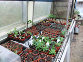 propagator full of cuttings and seedlings