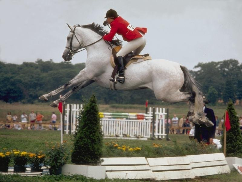 Gallery For > Olympic Horse Jumping Landing