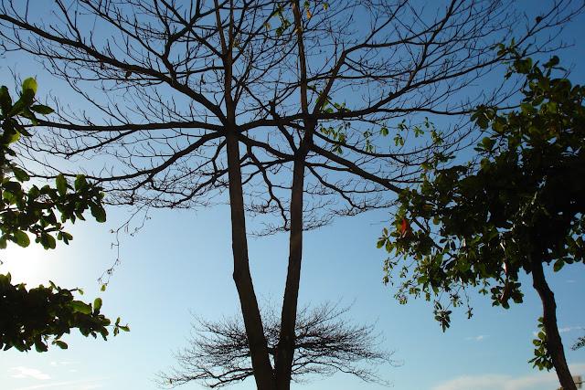 Árvore no outono, Foto de Marcelo Migliaccio