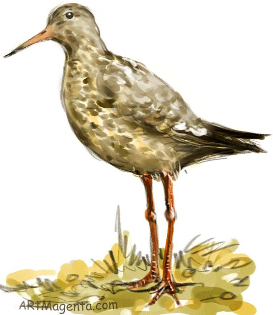 Common Redshank is a bird illustration by artist and illustrator Artmagenta