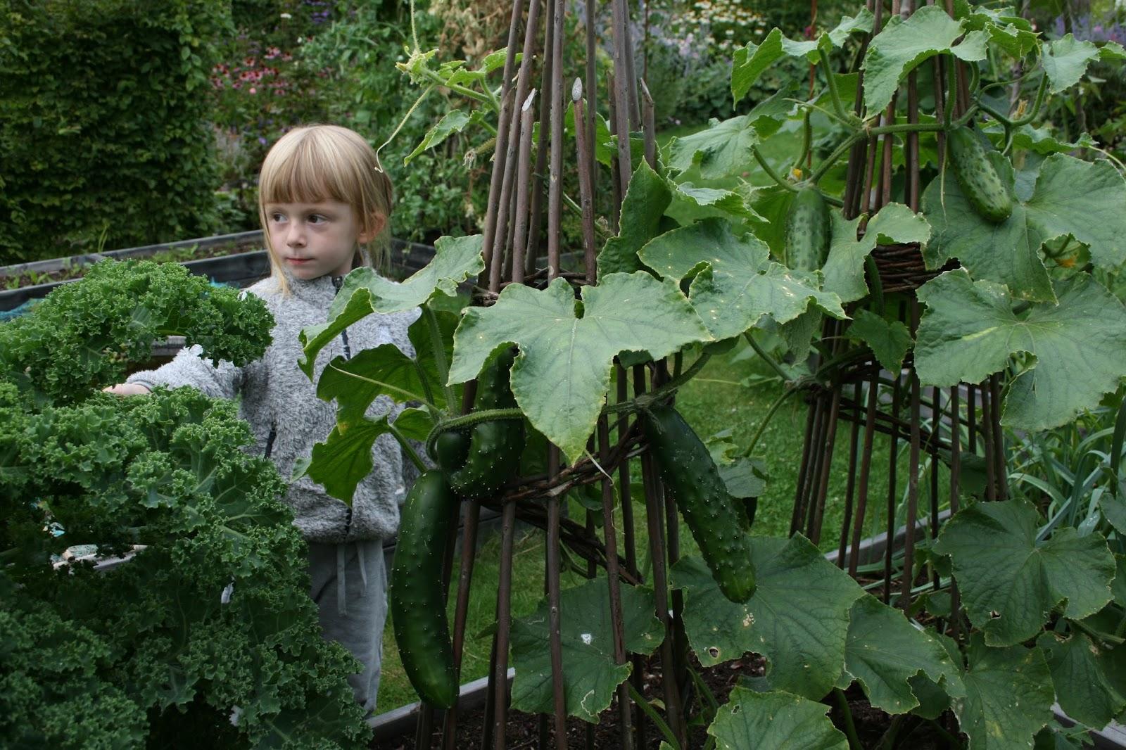 ekologiska grönsaker antioxidanter