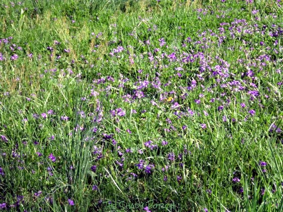 Wild flowers on our hill