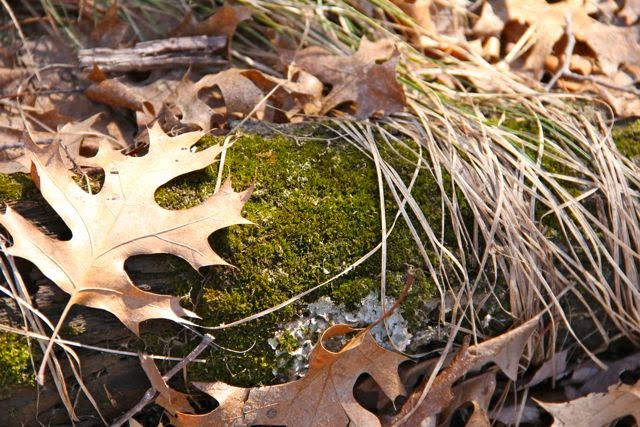 """""""moss green"""" if I knew the genus, else just green moss"""