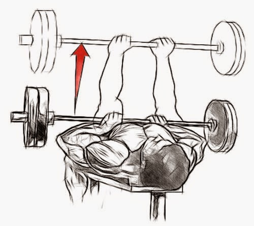 Top Four Tricep Workouts For Mass