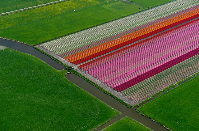 Fotos aéreas de plantações de tulipas na Holanda