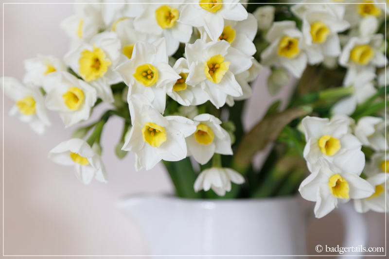 Narcissus in White Jug
