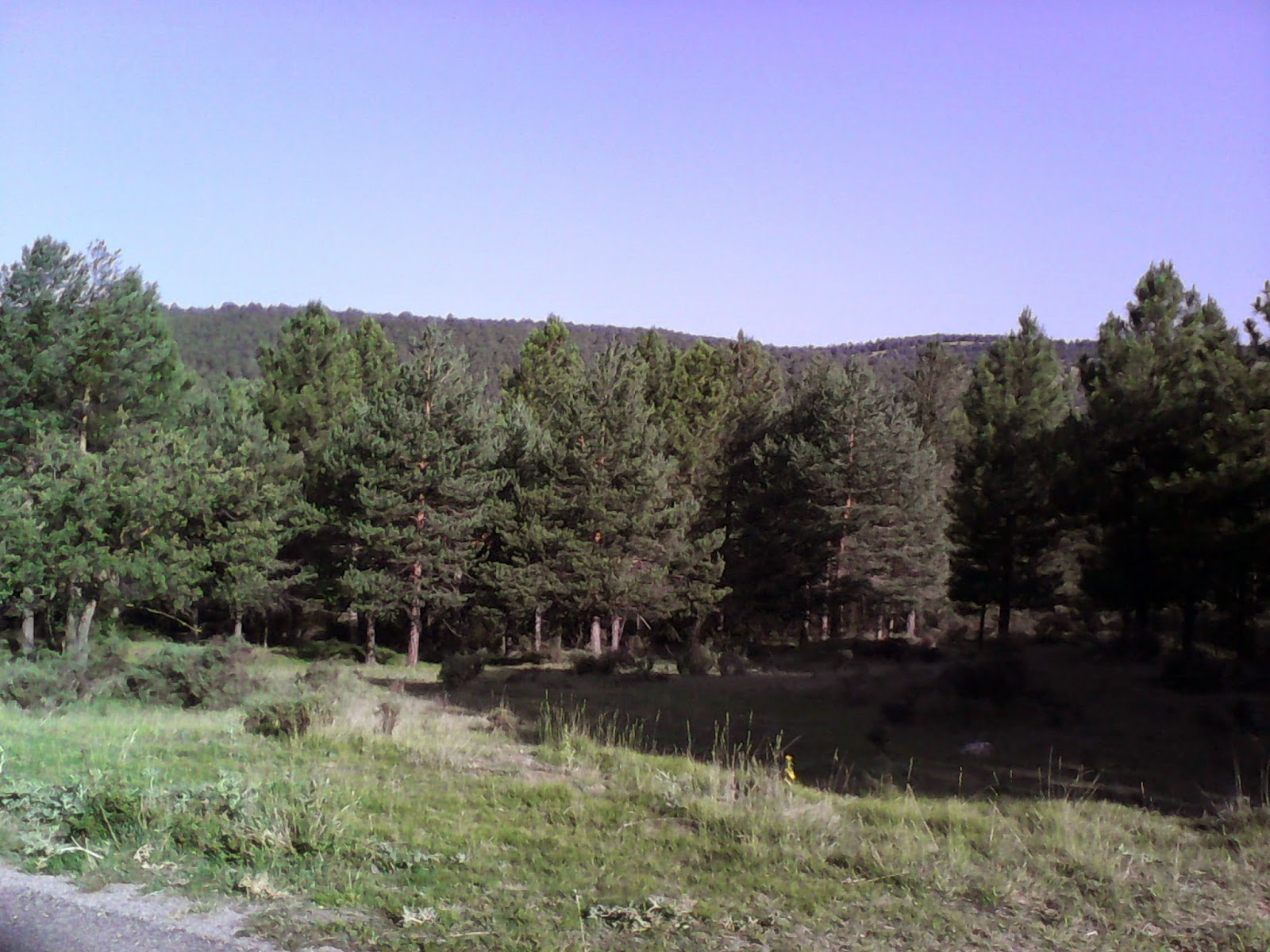 Bosque algarbe
