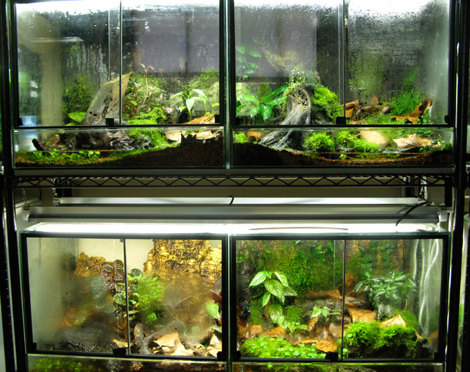 The Fern And Mossery Protean Terrarium Design