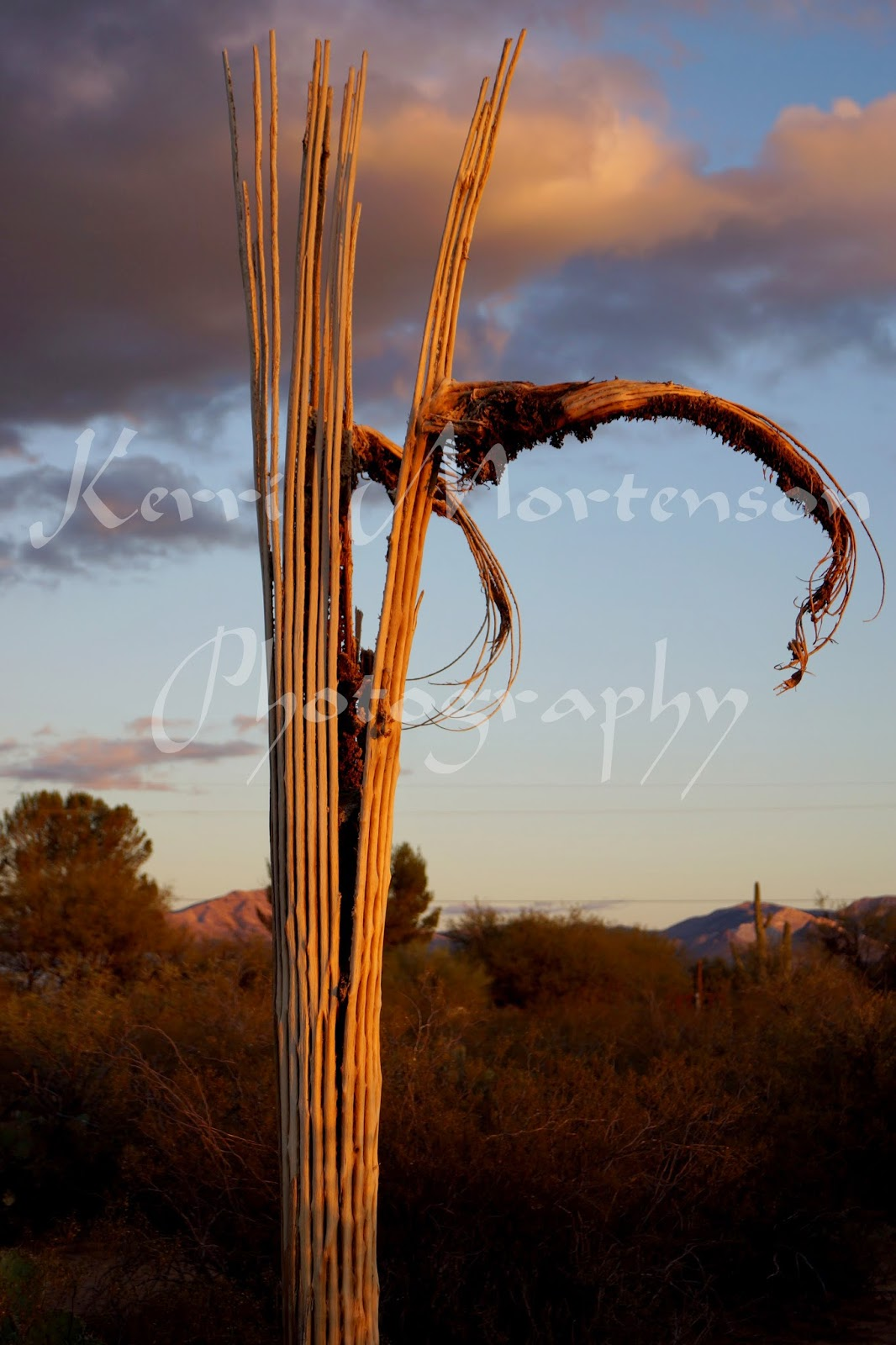 http://kerri-mortenson.artistwebsites.com/featured/cactus-ribs-kerri-mortenson.html