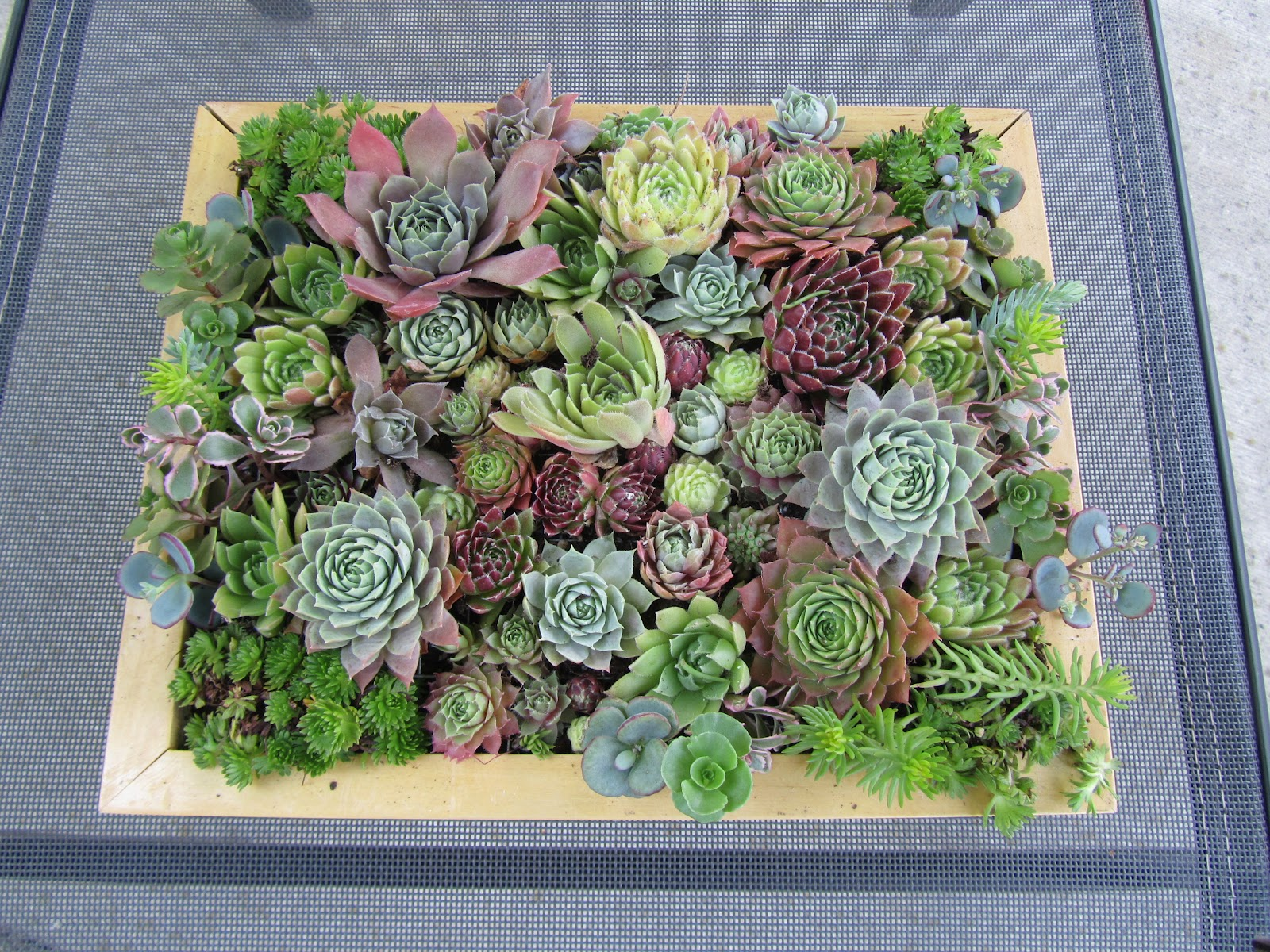 Cheesehead gardening succulent picture frames from goodwill find jeuxipadfo Image collections