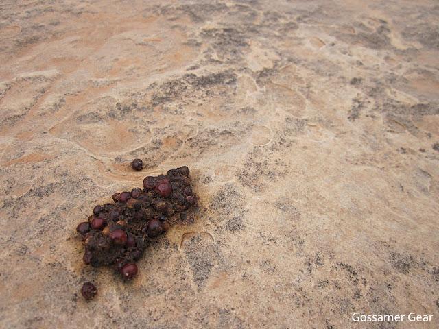 desert poop