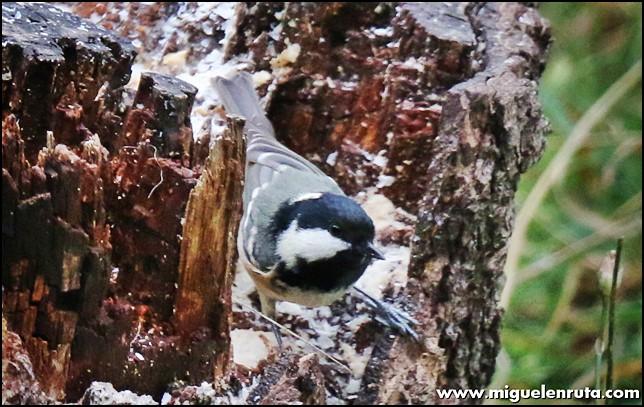 Hide-Ornitología-Hostal-Almanzor-Gredos_5