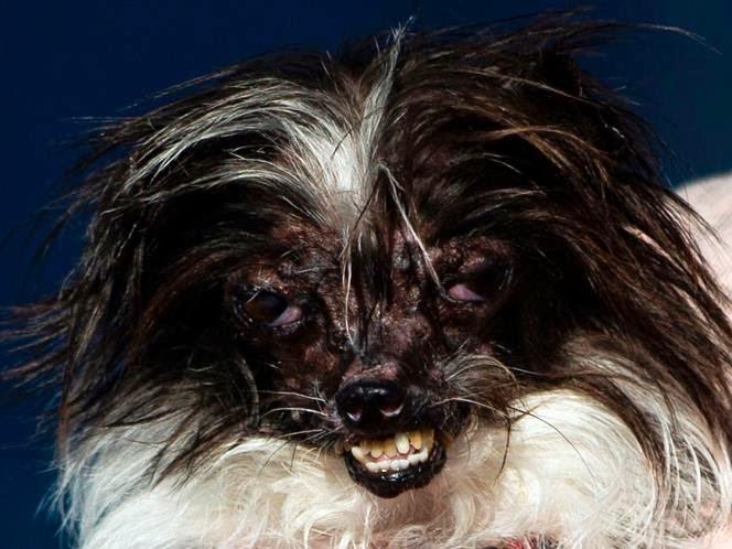 Cão bizarro