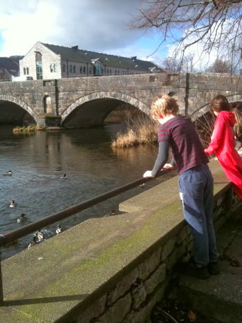 watching the birds at Stramongate Bridge, Kendal