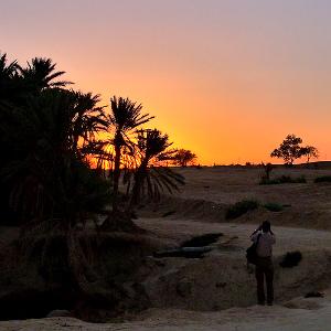 Oasis en Tozeur - Túnez