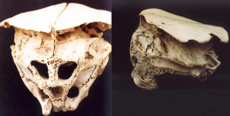 Vistas del misterioso cráneo de Rhodope, Bulgaria