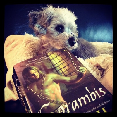 Murchie lays on a sheep-shaped pillow, his head twisted to one side and his ears perked. Directly in front of him is a paperback copy of Corambis. Its yellow- and purple-tinged cover features a golden-skinned, shirtless man chained in a cell with barred windows.