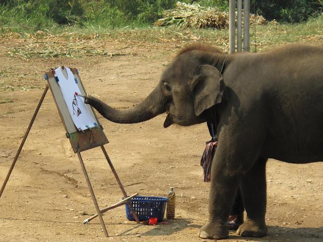 Fun of Elephant