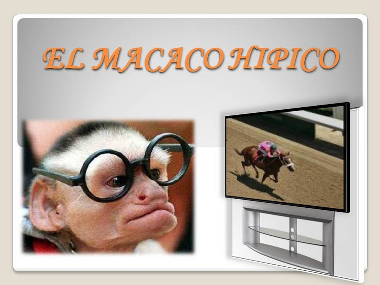 MACACO HIPICO ON LINE