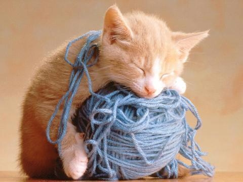 Cute Kitty babies pets and animals