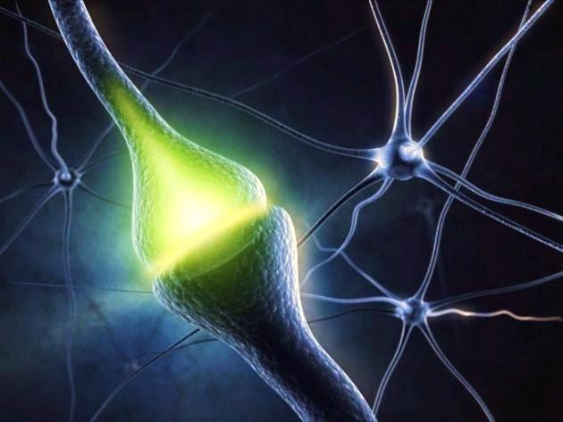 Resultado de imagen de No obstante, una neurona no recibe una sola entrada desde una sinapsis neuronal individua