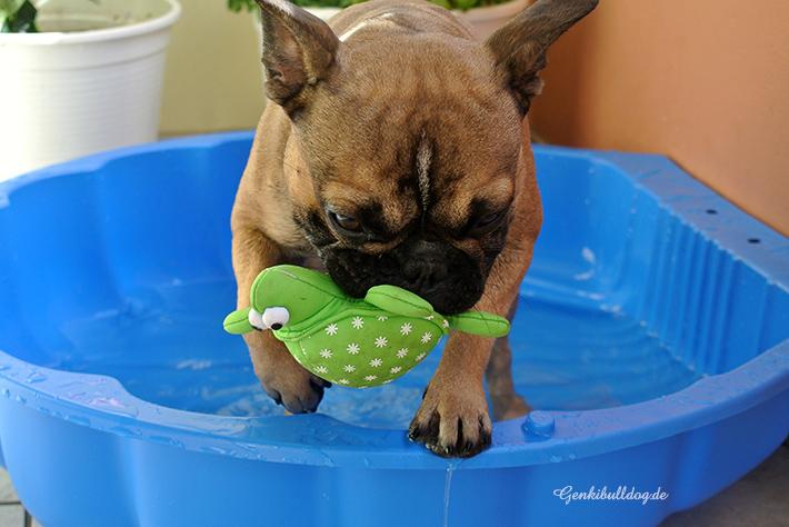 Hundewasserspielzeug
