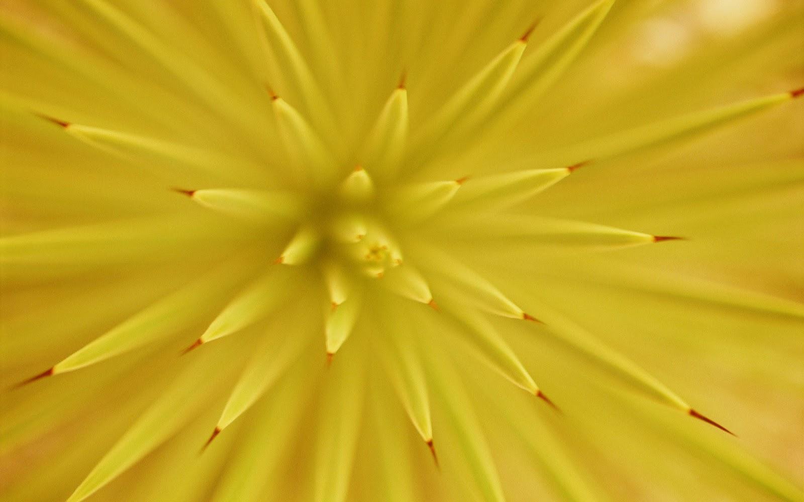 I colori e la musica il colore giallo for Oggetti di colore giallo