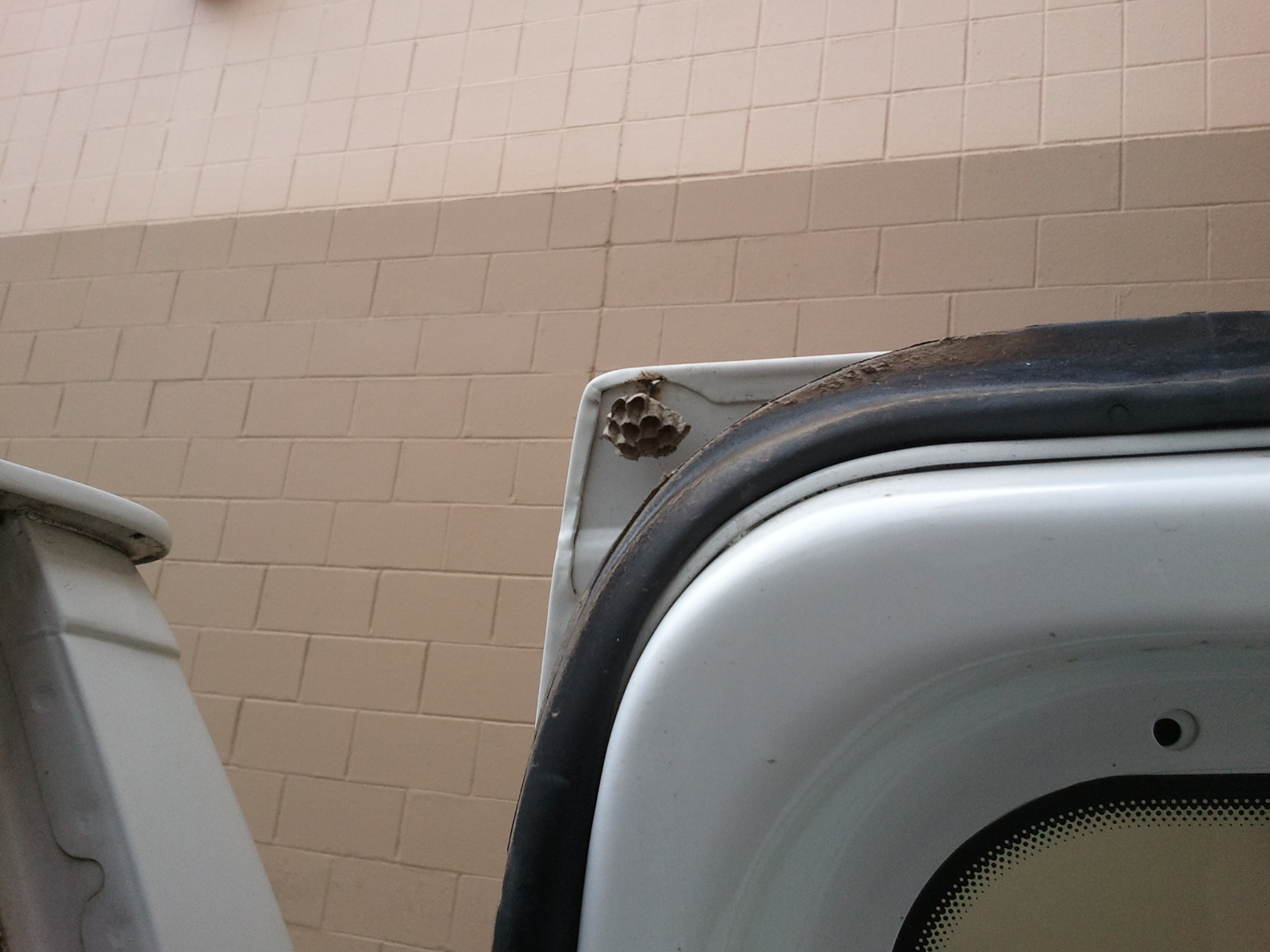 Do You Smell Popcorn? Wasp Nest In Car Door