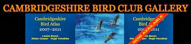 CAMBRIDGESHIRE BIRD CLUB GALLERY
