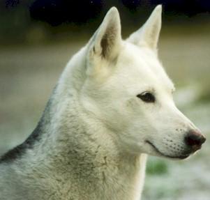 Run in the snow membri - Husky occhi diversi ...