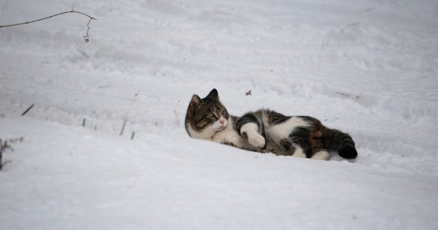 waiting bd  marvelous cats having a blast in the snow